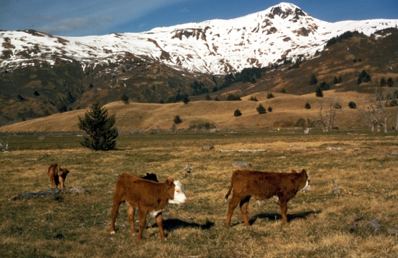 Livestock on Kodiak Island in 1972, via U.S. Fish and Wildlife Service National Digital Library