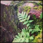 A tenacious fern grows through some forgiving brick stair steps.